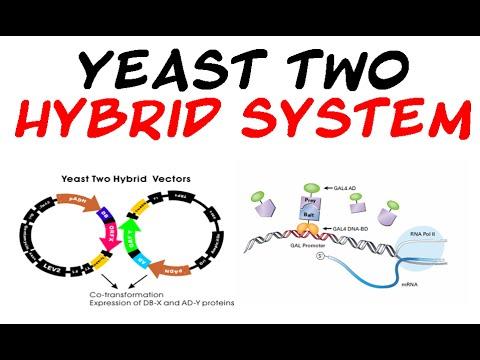 application of yeast 2 hybrid